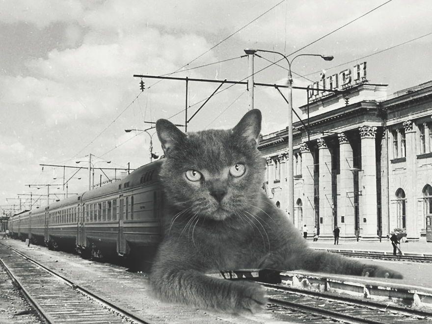 מקור Funny cat images, Huge cat, Funny cat