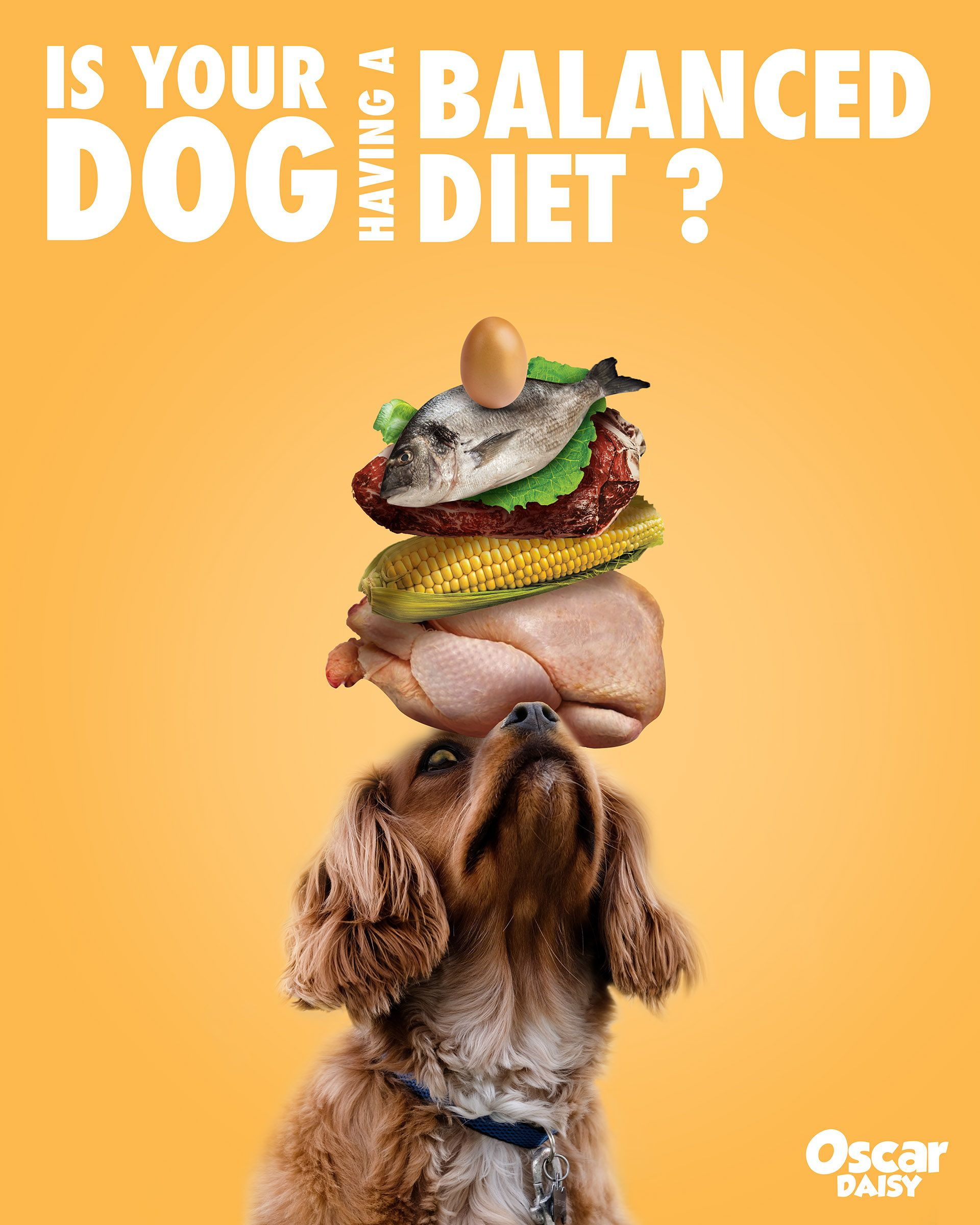 Healthy Pet Food Ad Poster On Behance Healthy Pet Food