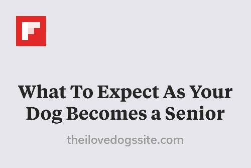 What To Expect As Your Dog Becomes a Senior http://theilovedogssite.com/what-to-expect-as-your-dog-becomes-a-senior/