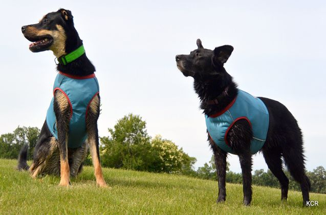 Product Review Hurtta Cooling Vest Dog Activities Dogs Pets