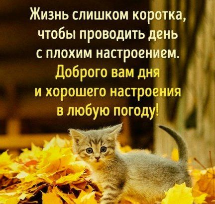 6 Odnoklassniki Cool Words Good Morning Inspirational Quotes Motivation