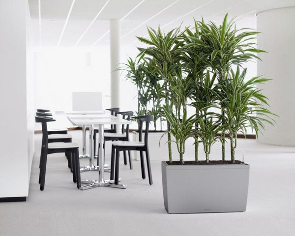We are committed to delivering beautiful plant solutions that are