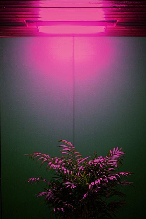 That Arab girl | Neon aesthetic, Aesthetic wallpapers ...