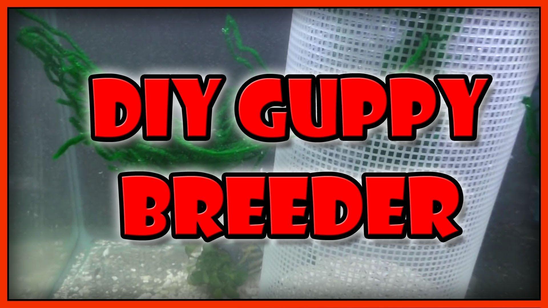 DIY Guppy Fry Trap Breeding Cage Breeder Net How to Breed Guppy