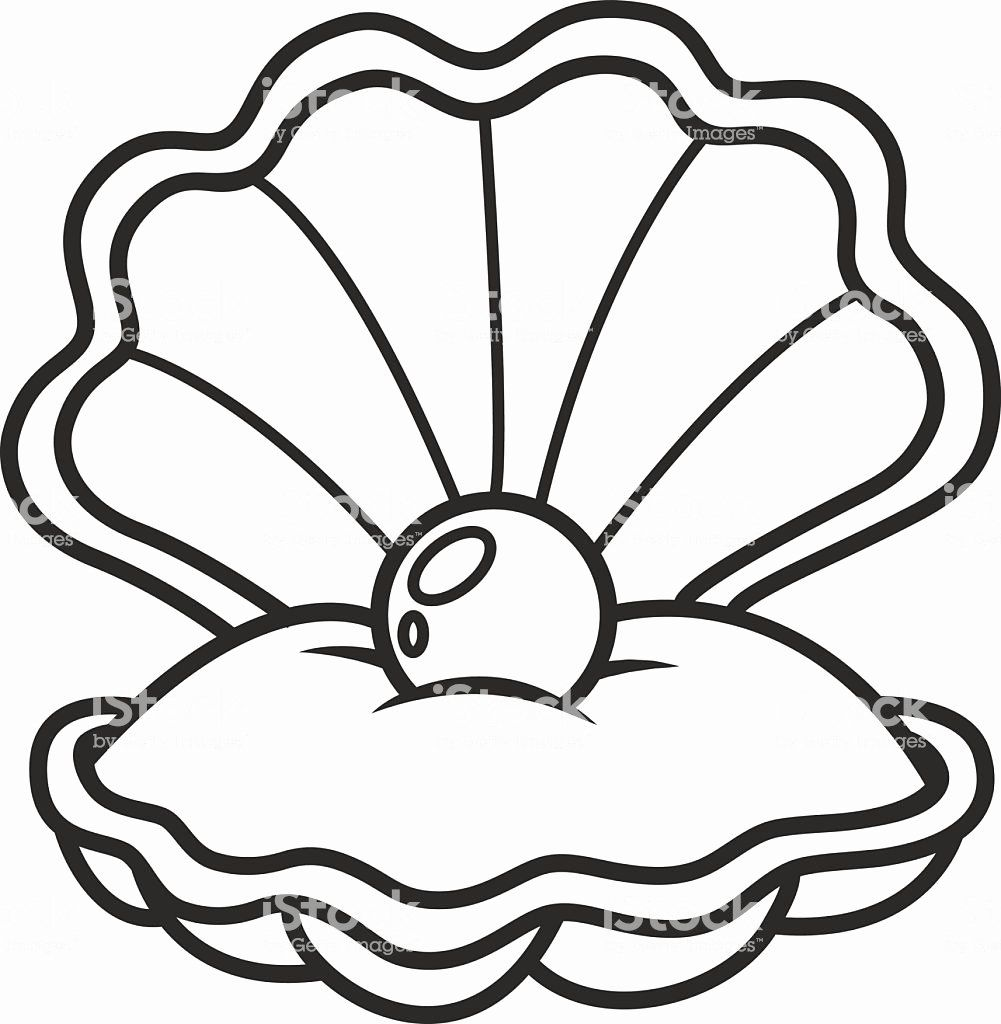 Sea Shell Coloring Page Luxury Scallop Seashell With Pearl Stock Illustration Download Seashell Drawing Shell Drawing Sea Shells