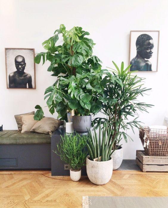 Plants For Modern Home House Plants Beautiful Plants Zimmerpflanzen Wohnung Pflanzen Schone Zimmerpflanzen