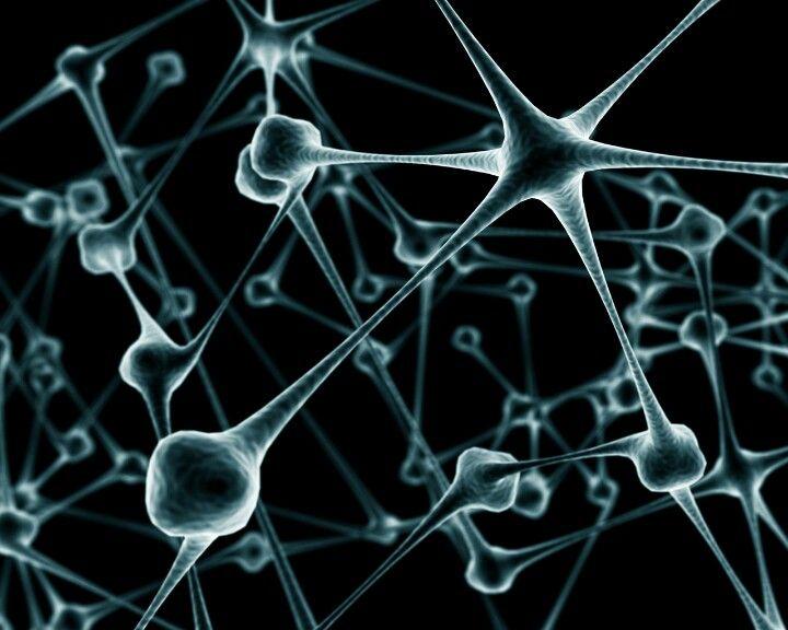 Neuronas   Captura visual   Pinterest   Neuronas, Anatomía humana y ...