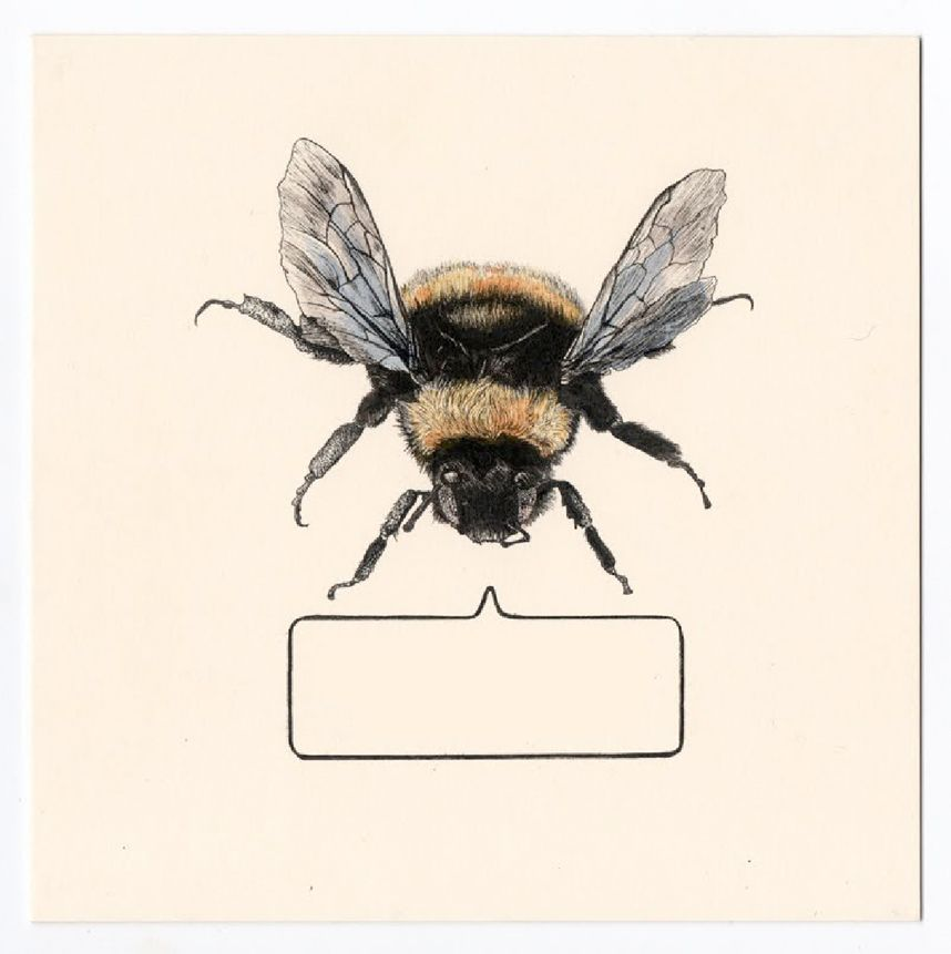 Pics For Bumble Bee Scientific Illustration