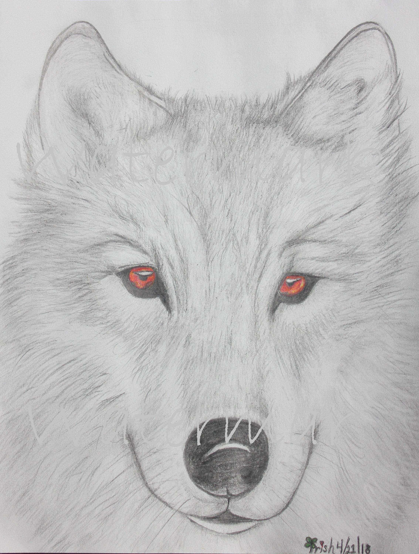 как нарисовать волка фотографии как