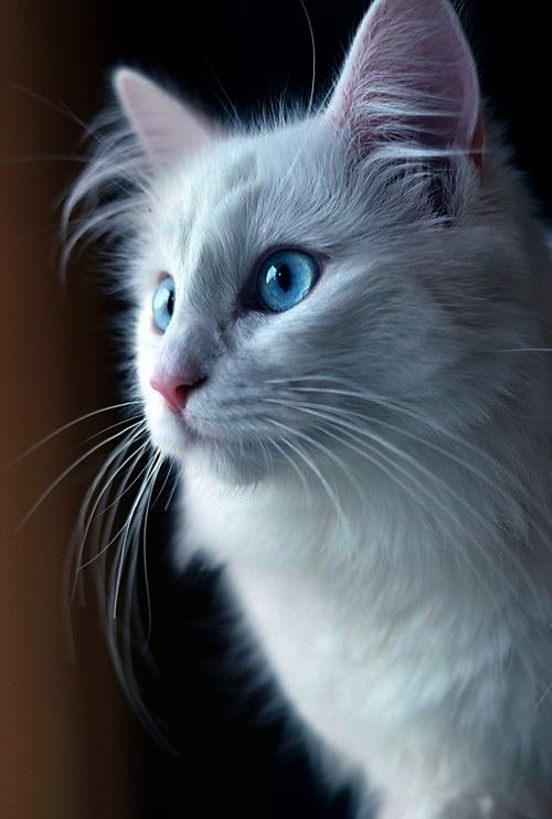 Found    Beautiful Cat Names Male #view | Cats | Cats