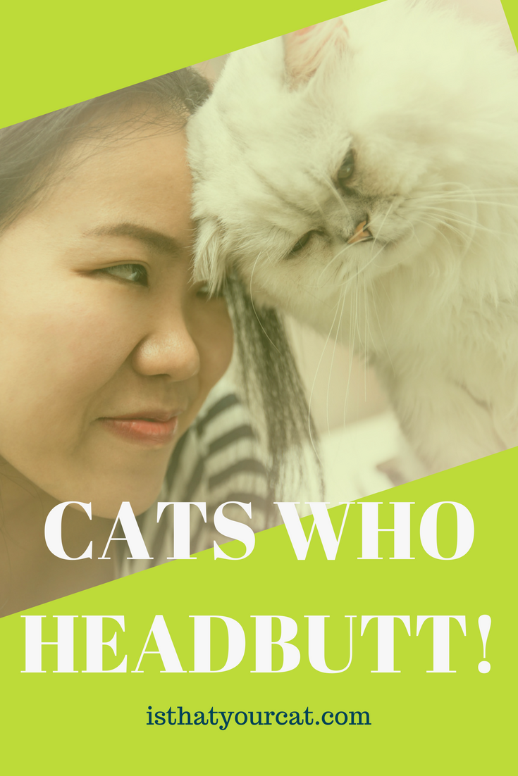 Why Do Cats Headbutt You When You Get Home? Cats, Pet parent