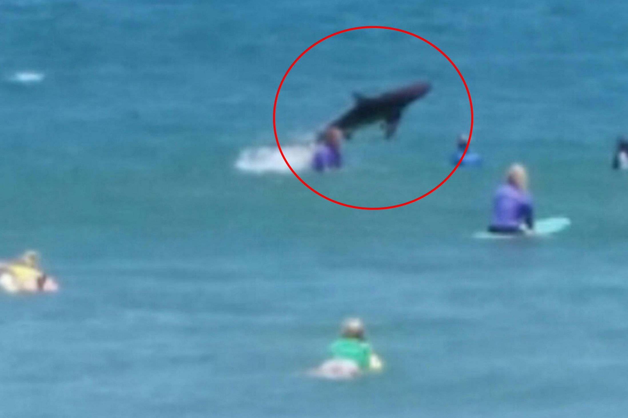 Spinner Shark Photobombs Surfers At Coffs Harbour Competition In Australia Surfer Sharks Scary Shark