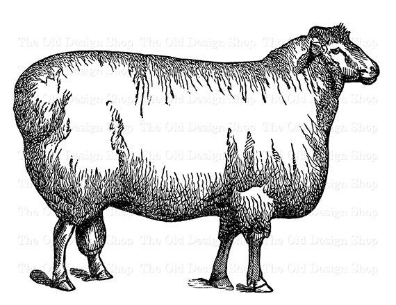 Cotswold Sheep Clip Art Vintage Farm Animal Illustration Etsy Clip Art Vintage Sheep Clip Art Animal Illustration