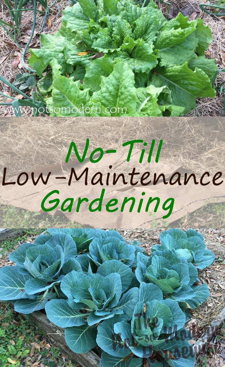 Low-Maintenance No-Till Gardening