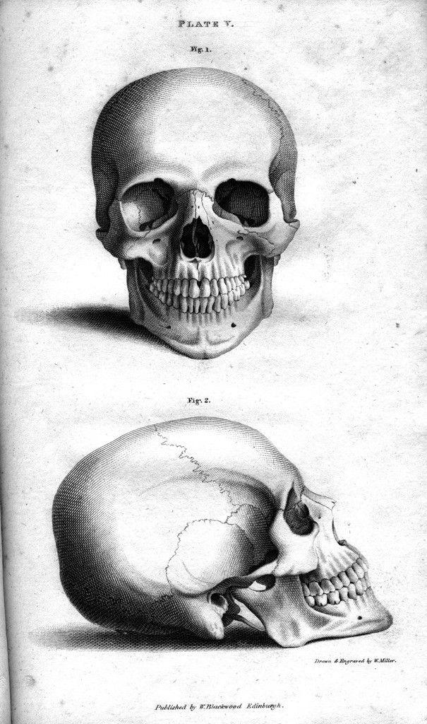 Анатомия - Сайт artreference! | Skull | Картинки черепа ...