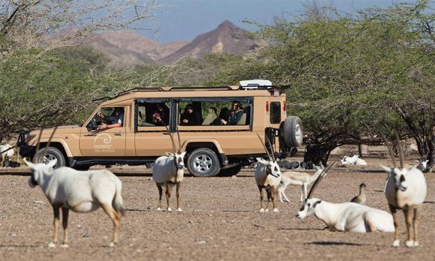 مغامرة تحت ضوء البدر المكتمل على جزيرة صير بني ياس Travel Desert Island Island Resort Dubai Tourist Spots