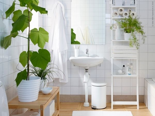 Green Plants Bathroom Decorating Ideas Small Bathroom Design Best Bathroom Designs Shower Plant Bathroom Plants
