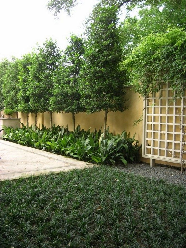 30 BIG TIPS AND IDEAS TO CREATE BACKYARD PRIVACY LANDSCAPING #privacylandscaping