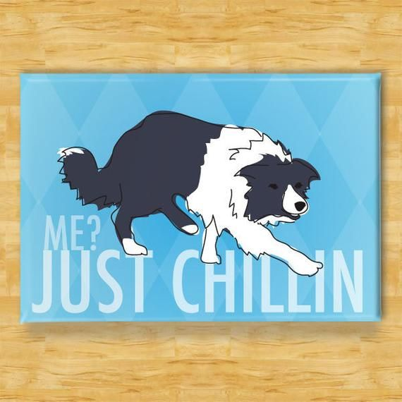 Border Collie Magnet Just Chillin Border Collie Gifts Funny