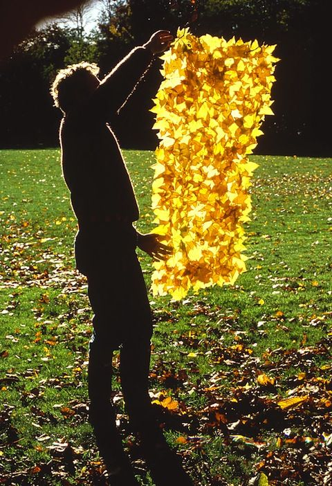works of Andy Goldsworthy: windblown disintegration