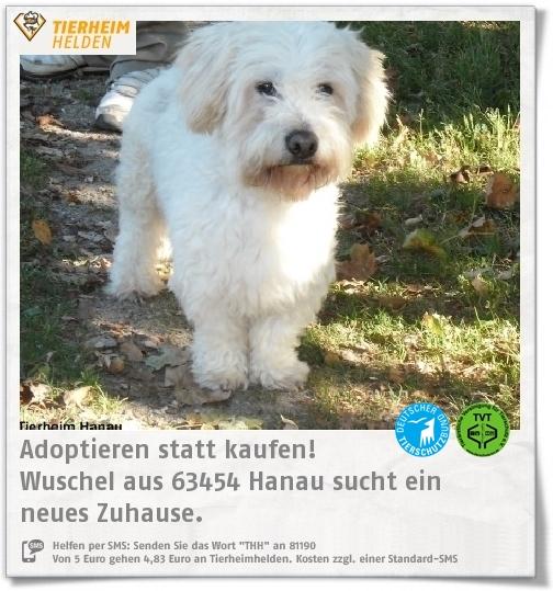 Wuschel Aus Dem Tierheim Hanau Sucht Ein Zuhause Http Www Tierheimhelden De Hund Tierheim Hanau Malteser Mischling Wuschel 1 Tierheim Mischlingshunde Hunde