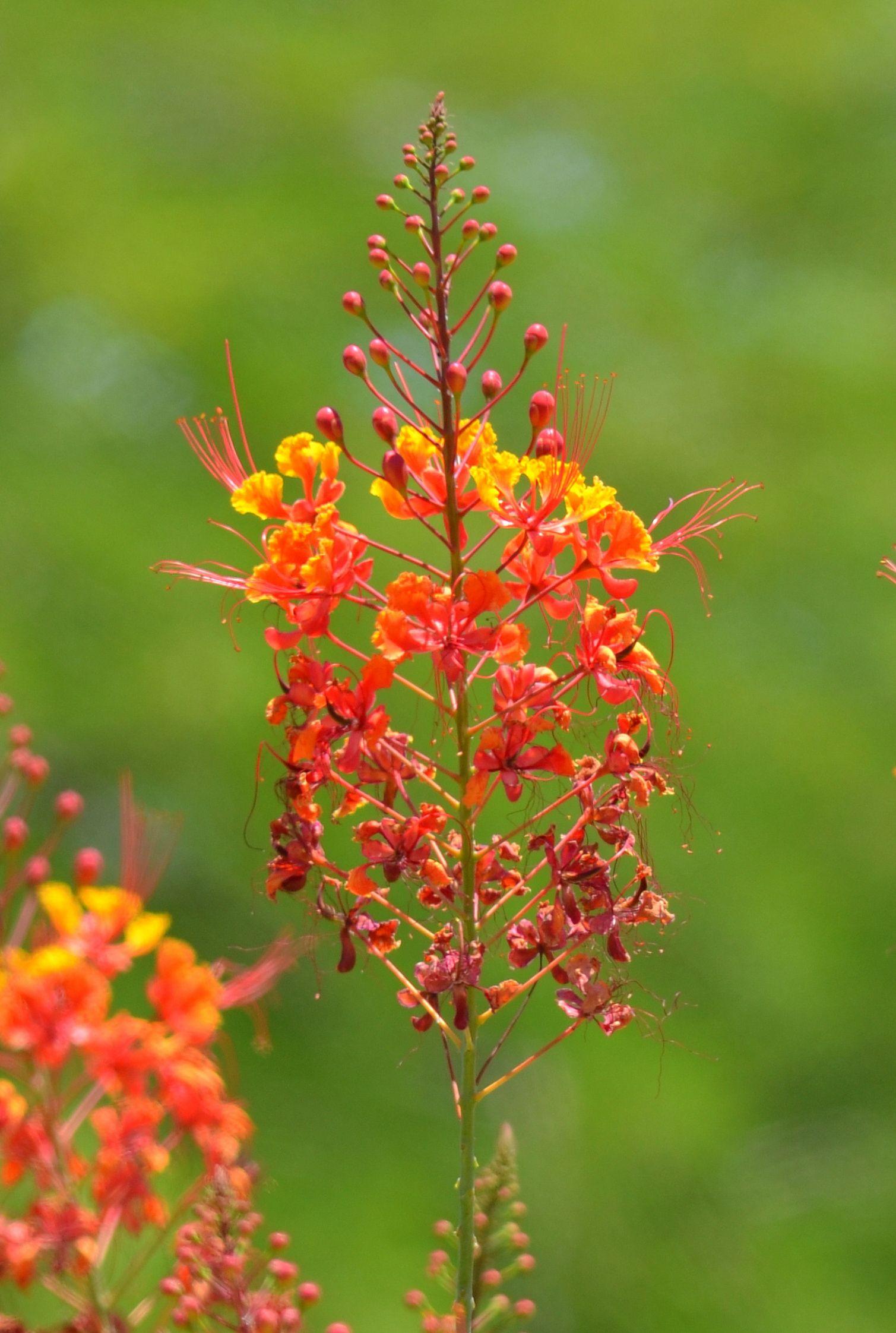 Flowers phoenix arizona arizona pinterest