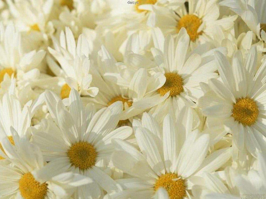 Flower garden photographs u art pinterest gardens flowers