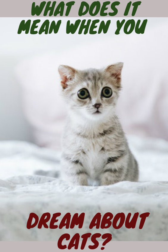 What Does It Mean When You Dream About Cats I Love Cats Kittens Funny Cats