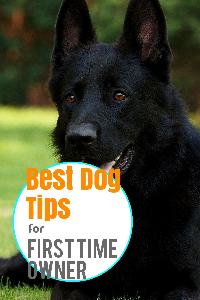 Check Out These Simple Dog Training Ideas Easiest Dogs To Train