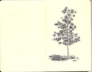Treasuring Grace: Making Whole: Line Drawing: Tree