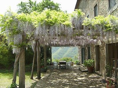 Carport trellis breezeway with wisteria over the top to soften it or ...