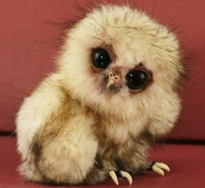 i want him!!!!!!