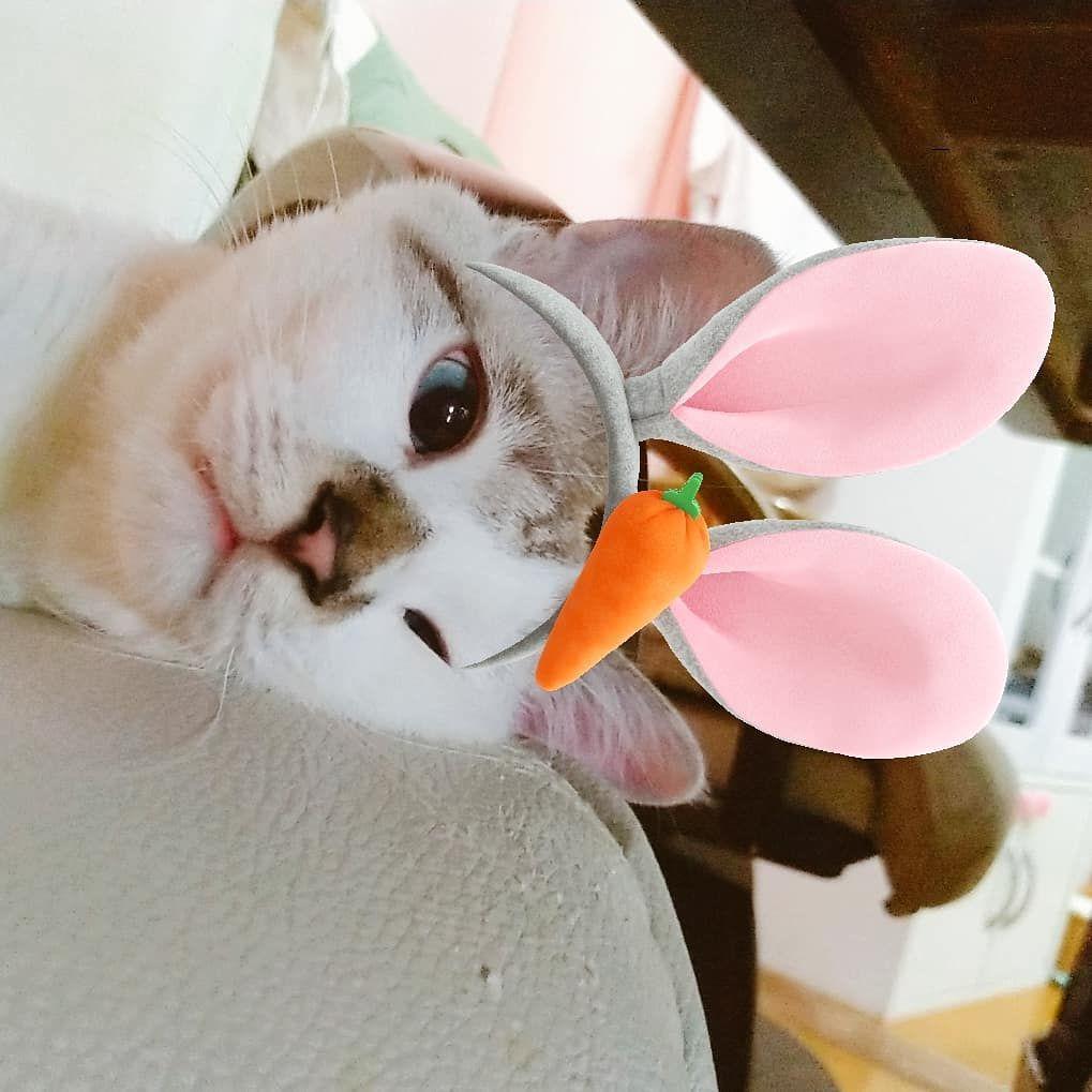 過敏 猫 知覚 猫の知覚過敏症について獣医師が解説