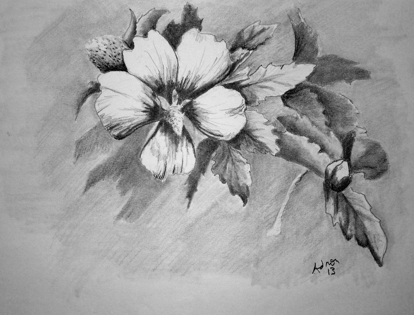Beautiful sketches of flowers beautiful pencil drawings for Beautiful drawings of trees