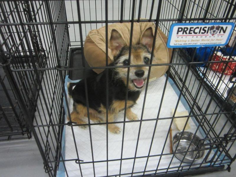 Puppy rescue mooresville nc