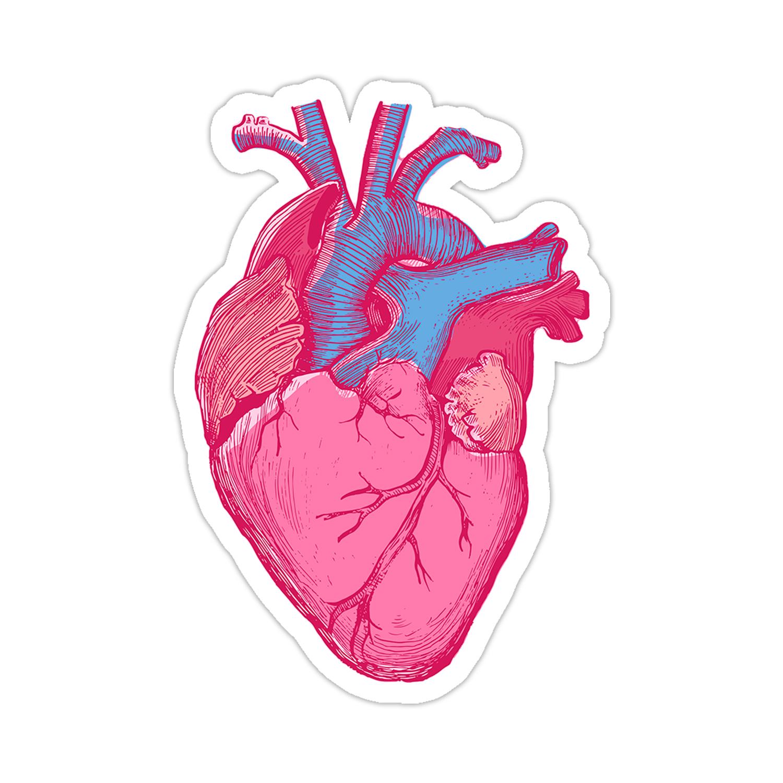 Anatomy Heart Sticker Pegatinas Imprimibles Diseno De Pegatina Pegatinas