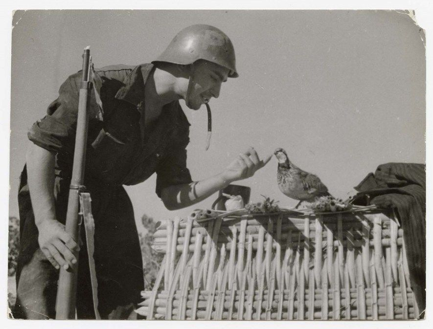 Robert Capa, [Soldier of the Partido Obrero de Unificación Marxista (POUM) with dove, Aragón, Spain], August 1936