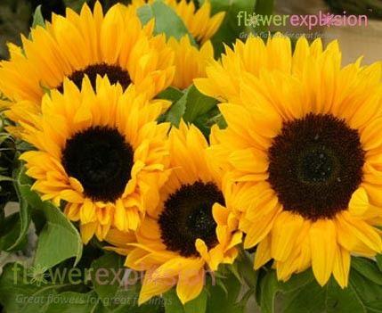 Summer Flowers Sunflower Flower Wedding Flower Photos Plants Are Friends