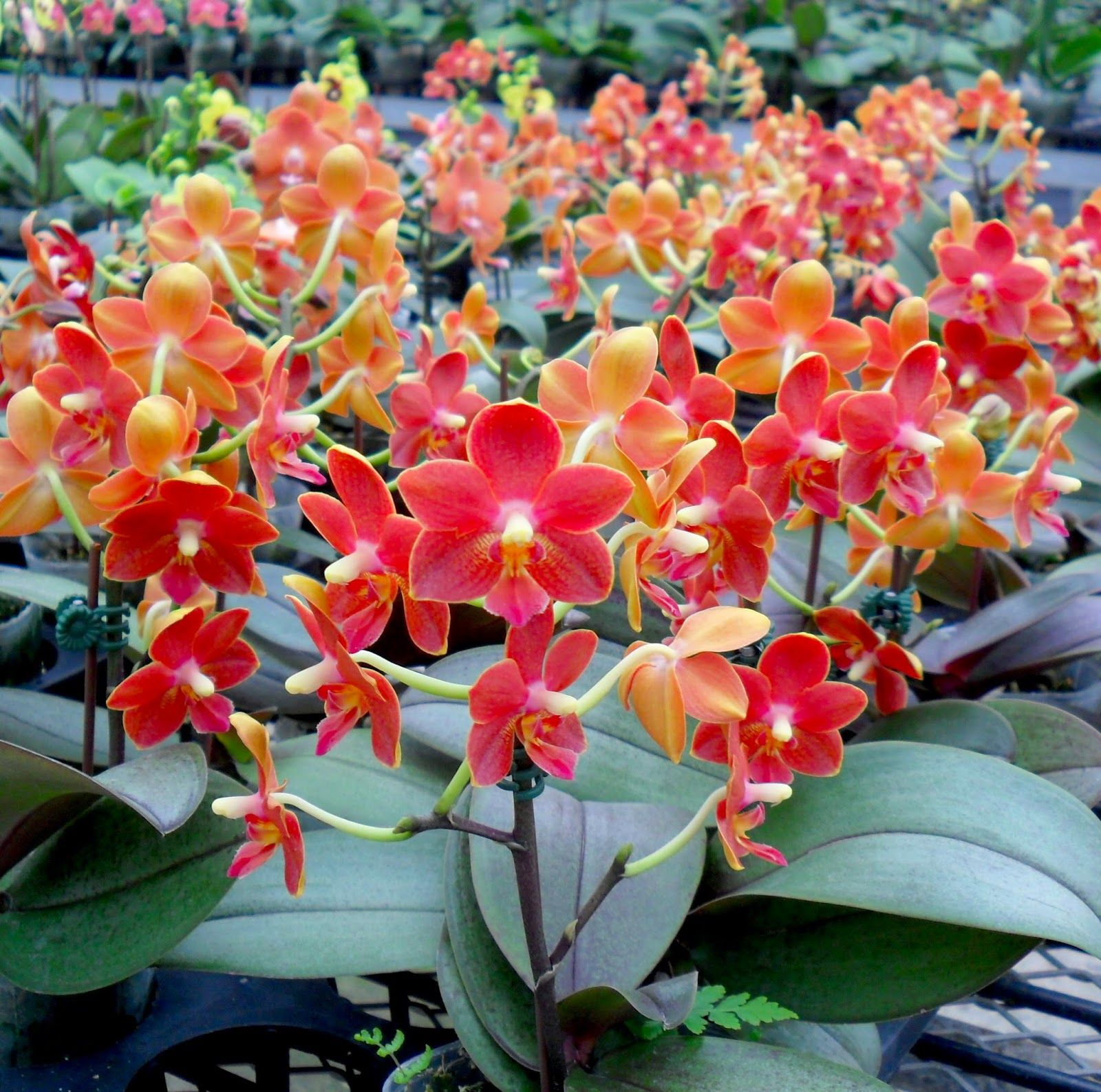 Most Beautiful Plants For Bedroom: Ten Of The Most Beautiful Orchid Flowers