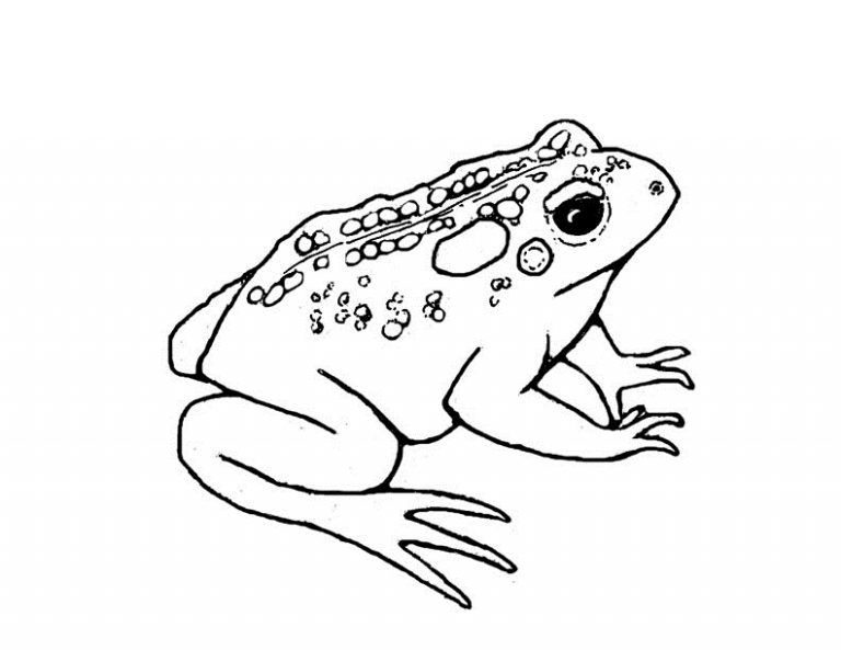 Free Printable Toad Coloring Pages For Kids Fox Coloring Page