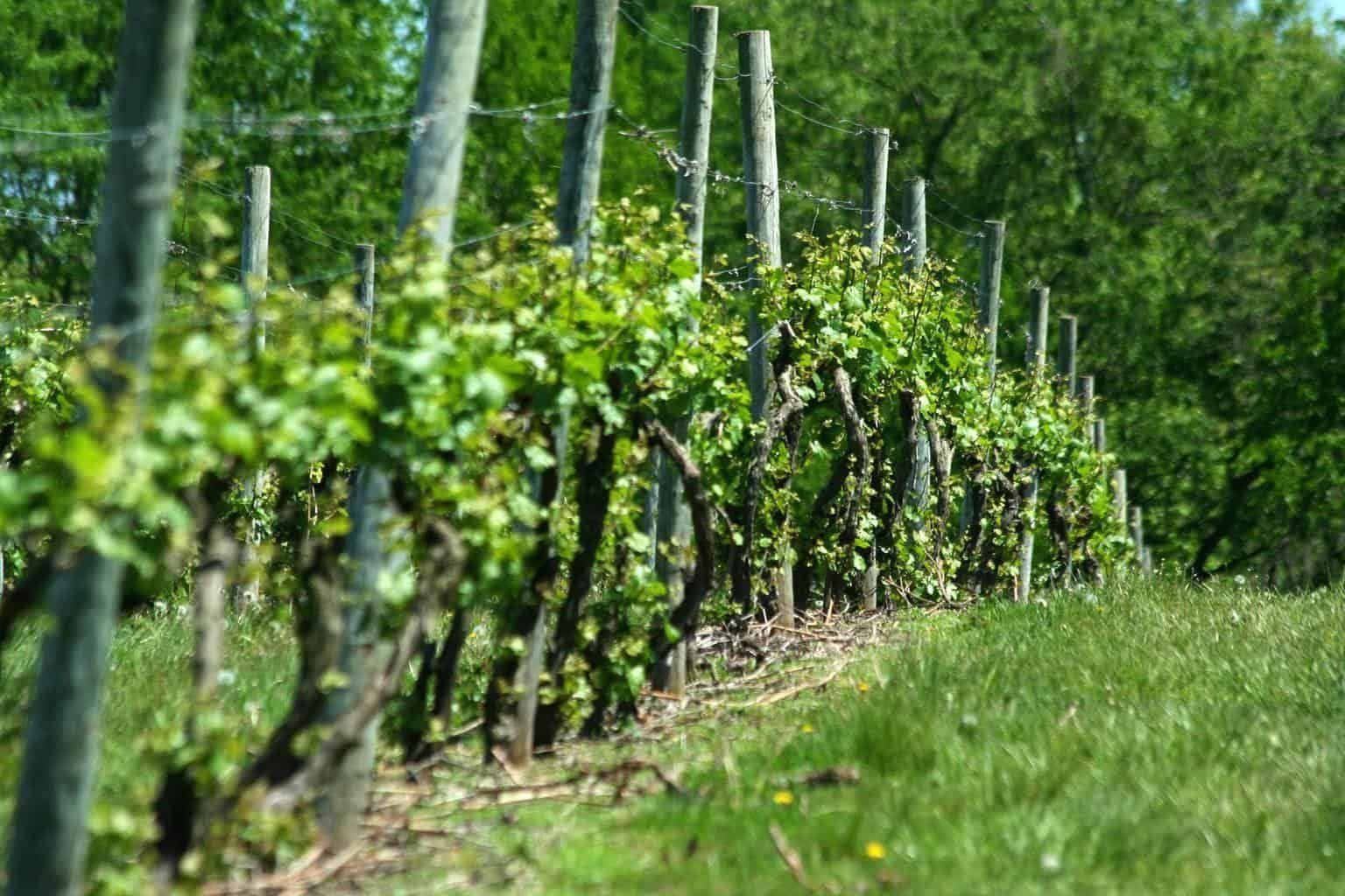 how to build orchard and vineyard trellises