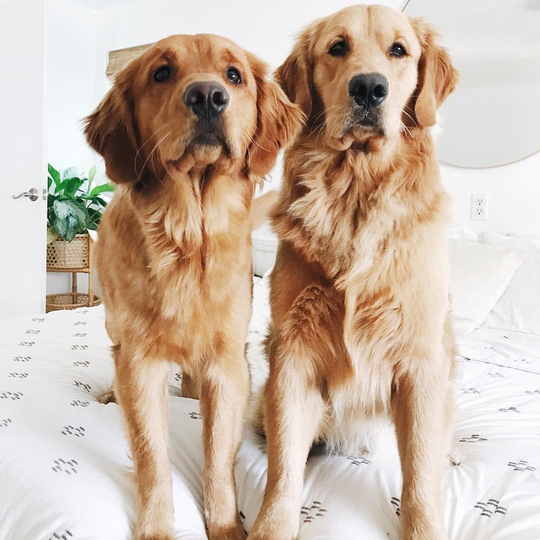 Riityeyayeѕt Carmelizabethhh Dogs