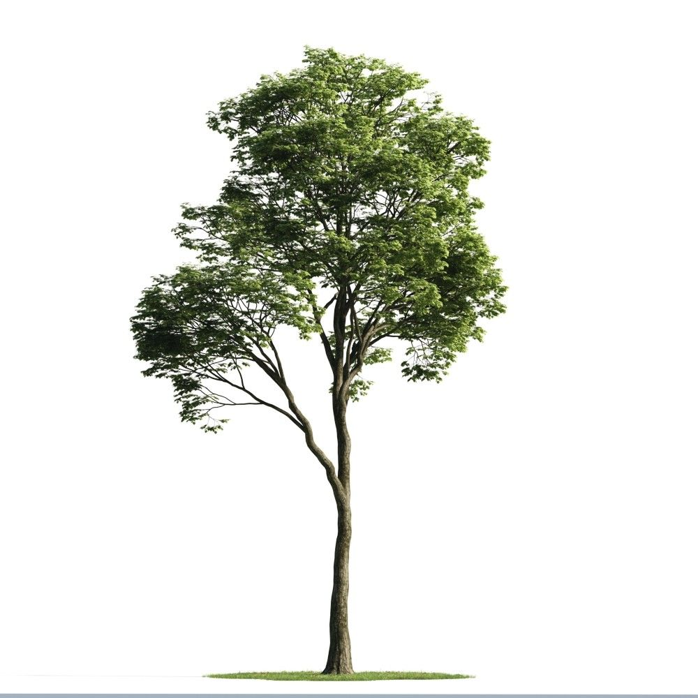 how to add trees in photoshop