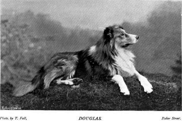 Douglas, a Collie.  About late 1800s.
