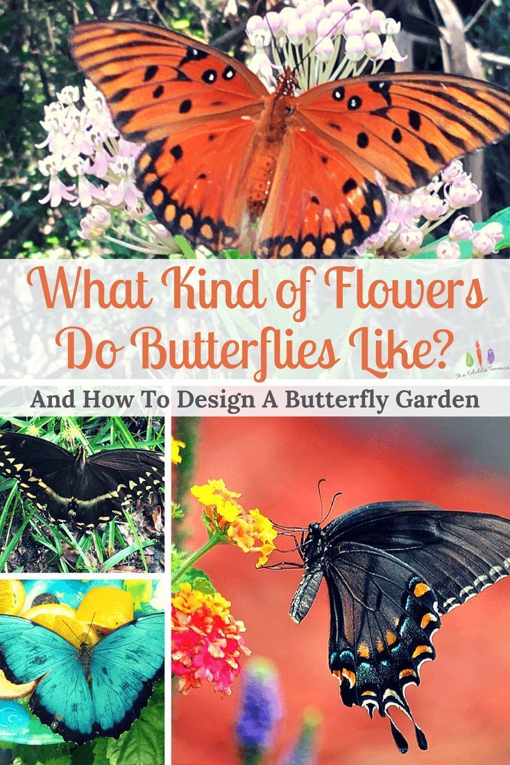 Garden Ideas · From Monarchs To Swallowtails, We All Love To See Butterflies  Hanging Out In Our Yards