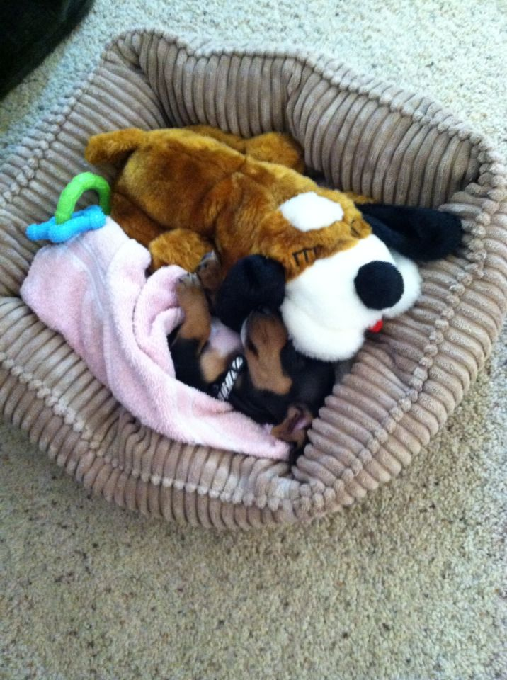 The Stuffed Animal Is A Heartbeat Puppy It S Run On Aaa Batteries