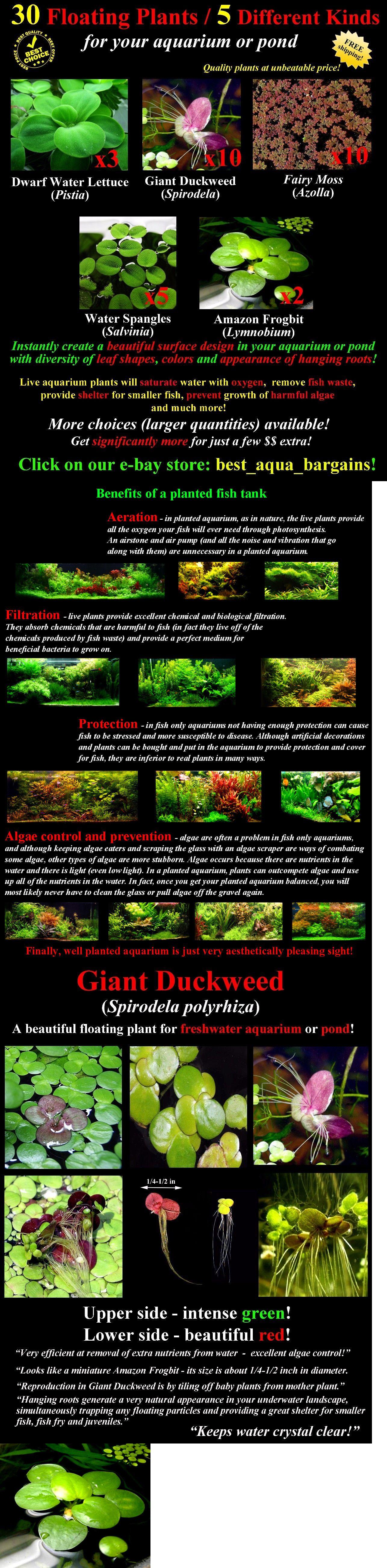 30 Floating Live Plants 5 Types for Aquarium or Pond Moss Fern Anubias Betta