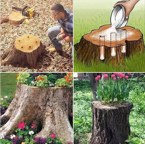 1 Place A Plastic Planter Upside Down In The Center Of A Tree Stump S Surface Trace Around The Planter S Ou Tree Stump Decor Garden Yard Ideas Garden Projects