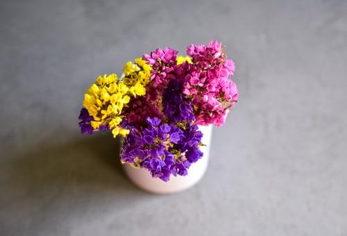 اجمل بوكيه ورد طبيعي صور اجمل بوكيه ورد طبيعي جميل Zina Blog Pink And Purple Flowers Purple Flowers Plants With Pink Flowers