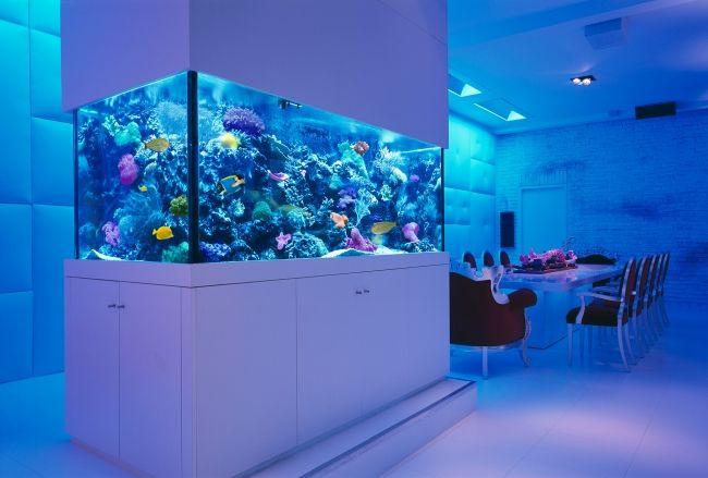 Aquarium Ideen Moderne Einrichtung Blaue Led Leuchten Essbereich